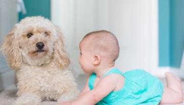 Trasloco con animali domestici e con bimbi piccoli: come fare?